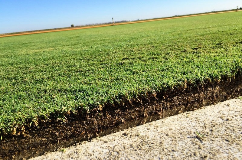 West Coast Turf's new proprietary sod product going to Super Bowl 50 at Levi's Stadium.  (PRNewsFoto/West Coast Turf)